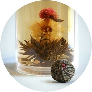 Bloom Flowering Tea - Shooting Star